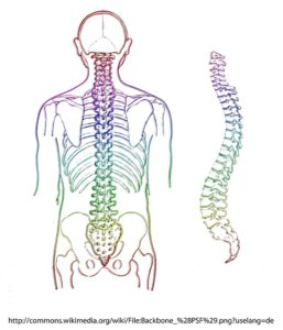 Rückenschmerzen, HWS-Syndrom, ISG-Syndrom, LWS-Syndrom, BWS-Syndrom, Muskelhartspann, Blockade, sanft Chiropraktik, Dorntherapie, Breußmassage